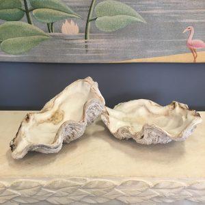 Pair of Tridacna Shells